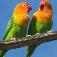 5-jenis-burung-termahal-di-indonesia-yang-mau-tau-boleh-cukup-liat-liat-saja