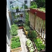 mulai-hobi-berkebun-dengan-11-tanaman-termudah-tumbuh-tetap-di-rumah-ramadan-berkah