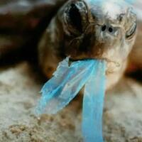 bahaya-limbah-plastik-dan-8-daun-yang-bisa-dipergunakan-sebagai-pembungkus-makanan