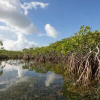 jika-permukaan-air-laut-naik-terus-mungkin-pada-2050-pohon-bakau-akan-hilang