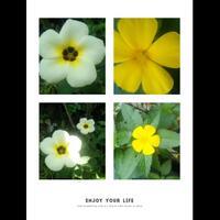 bunga-pukul-8-selain-cantik-ternyata-banyak-manfaatnya