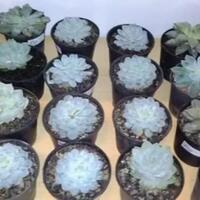beberapa-jenis-tanaman-hias-yang-dapat-mempercantik-ruangan