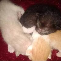 semangat-berjuang-untuk-lexy-kucing-kesayangan-dan-keempat-anaknya