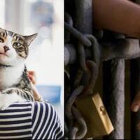 miris-alih-alih-menolong-kucing-ibu-ini-malah-di-jatuhi-hukuman-penjara
