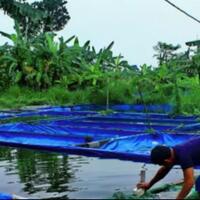 4-jenis-ikan-air-tawar-yang-paling-mudah-untuk-dibudidayakan-yuk-mampir-dimari-gan