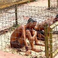penjara-paling-sadis-di-dunia-yang-berada-di-vietnam-phu-quoc