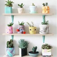 fresh-dan-elegan-berikut-7-rekomendasi-tanaman-hias-indoor