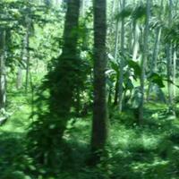 video-game-tentang-hutan