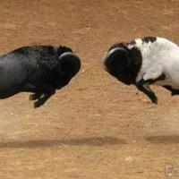 ustad-penebar-permusuhan-bisakah-masuk-kelompok-si-tukang-adu-domba