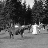 kulning-sebuah-tradisi-kuno-skandinavia-untuk-memanggil-ternak