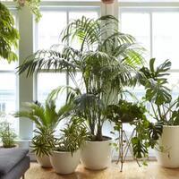 tanaman-hias-bermanfaat-untuk-kesehatan-dan-memperbaiki-suasana-hati-gan
