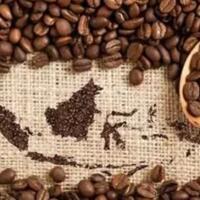 kopi-produksi-lokal-penikmatnya-seluruh-dunia