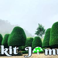 bukit-jamur-ciwidey-bandung-tempat-wisata-murah-dan-bikin-betah