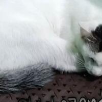 coc-mamalia-9-tips-membuat-kucing-menyukai-kita-sudah-teruji-secara-ilmiah