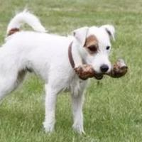 kenapa-anjing-selalu-mengubur-tulangnya-dog-lover-perlu-tahu-nih