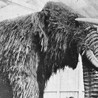 misteri-mahluk-mirip--mammoth--yang-membusuk-di-pantai-inggris