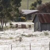 fenomena-hujan-aneh-di-australia-sekilas-nampak-seperti-salju-padahal-ini-faktanya