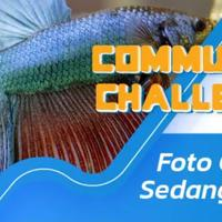 community-challenge-waktunya-cupang-mekar-mampang