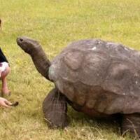 gila-ternyata-kura-kura-besar-umurnya-bisa-lebih-tua-dari-manusia-apa-rahasianya