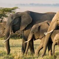 bukan-cuma-manusia-hewan-hewan-ini-jg-suka-nyimeng-salah-satunya-sering-kita-temui