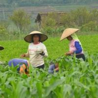 ask-eh-kaum-milenial-lo-pengen-gak-sih-kerja-di-sektor-pertanian