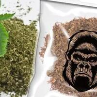 stop-bilang-tembakau-gorila--ganja-sintetis-itu-hoax-besar--cekidot-5-perbedaannya