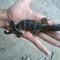 baby-salvator-jawa-40cm