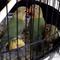 lovebird-produksi-cibinong