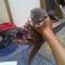 otter---linsang-usia-3-bulan-up-betina-jitot