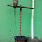 thread-khusus-burung-hantu-owl-kaskus---part-5