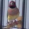 burung-finch-gauldamadine
