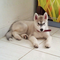 new-siberian-husky-lovers---read-page-1-for-update---part-2