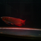 dijual-arwana-super-red-30cm
