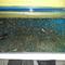 new--freshwater-fish-lounge---part-2