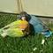 sharing-burung-paruh-bengkok-ii