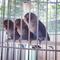 lovebird-lovers