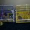new-hamster-lovers---part-2
