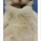 info-biro-jodoh-kucing-catlovers---read-page-1-first