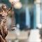 magang-hukum-di-kantor-hukum-advokat-surabaya