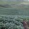 kerjasama-tanaman-kentang-atlantik