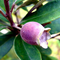 5-tanaman-buah-langka-di-indonesia-bahkan-ada-yang-terancam-punah