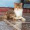 7-hal-yang-dibenci-kucing-dari-majikannya-pecinta-kucing-masuk