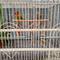 lovebird-lovers---part-1