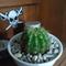new-cactus-lover