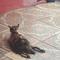 rucing-rumah-berisi-129-kucing-di-sidoarjo---membuka-pintu-adopsi---hibah