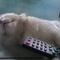 kucing--1-cukup--2-sangat-sangat-cukup-versi-ane