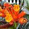 tips-receh-untuk-agan-sista-yang-doyan-flower-photography