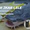 resep-jitu-umpan-ikan-lele-menggunakan-udang-paling-joss