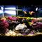 post-aquarium-laut-anda-disini