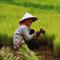 china-impor-5-juta-ton-beras-dari-amerika-serikat